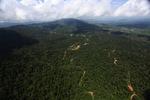 Oil palm plantation -- sabah_1584