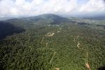 Oil palm plantation -- sabah_1585