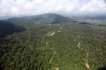 Oil palm plantation -- sabah_1586