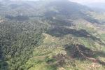 Oil palm plantation -- sabah_1590