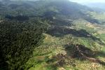 Oil palm plantation -- sabah_1591