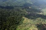 Oil palm plantation -- sabah_1592