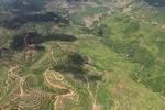 Oil palm plantation -- sabah_1597