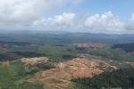 Oil palm plantation -- sabah_1598