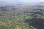 Oil palm plantation -- sabah_1607
