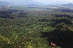 Oil palm plantation -- sabah_1608