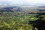 Oil palm plantation -- sabah_1610