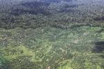 Oil palm plantation -- sabah_1611