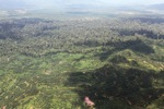 Oil palm plantation -- sabah_1614