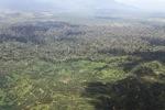 Oil palm plantation -- sabah_1615