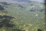 Oil palm plantation -- sabah_1617
