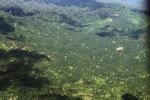 Oil palm plantation -- sabah_1618
