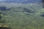 Oil palm plantation -- sabah_1619