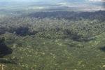 Oil palm plantation -- sabah_1621