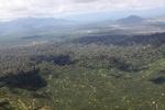 Oil palm plantation -- sabah_1623