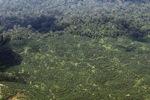 Oil palm plantation -- sabah_1624