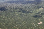 Oil palm plantation -- sabah_1625