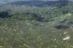 Oil palm plantation -- sabah_1626