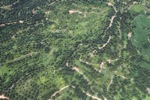 Oil palm plantation -- sabah_1633