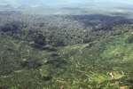 Oil palm plantation -- sabah_1635