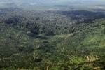 Oil palm plantation -- sabah_1637