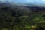 Oil palm plantation -- sabah_1638