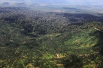Oil palm plantation -- sabah_1640