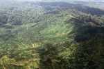 Oil palm plantation -- sabah_1641