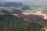Oil palm plantation -- sabah_1642