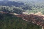 Oil palm plantation -- sabah_1643