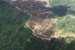 Oil palm plantation -- sabah_1644
