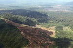 Oil palm plantation -- sabah_1645