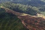 Oil palm plantation -- sabah_1646