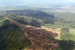 Oil palm plantation -- sabah_1647
