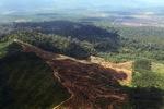 Oil palm plantation -- sabah_1648
