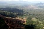 Oil palm plantation -- sabah_1649