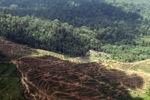 Oil palm plantation -- sabah_1650