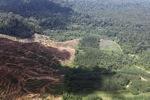 Oil palm plantation -- sabah_1651