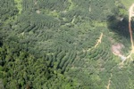 Forest and tree crops -- sabah_1654