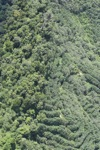 Forest and tree crops -- sabah_1657