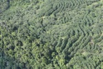 Forest and tree crops -- sabah_1658