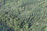 Forest and tree crops -- sabah_1659