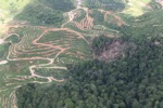 deforestation for oil palm -- sabah_1660