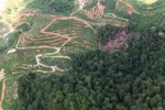 deforestation for oil palm -- sabah_1661