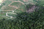 deforestation for oil palm -- sabah_1663