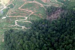 deforestation for oil palm -- sabah_1664