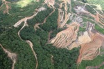 deforestation for oil palm -- sabah_1667