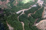 deforestation for oil palm -- sabah_1668