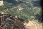 deforestation for oil palm -- sabah_1669