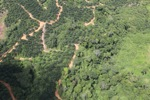 deforestation for oil palm -- sabah_1673